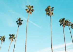 ロサンジェルスでいつもと変わらない日常を送る。格差、温暖化、入国制限… 変化するあらゆるもののそばで〜徒然アメリカ滞在記